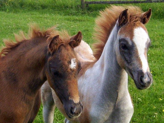 Welsh_Twins