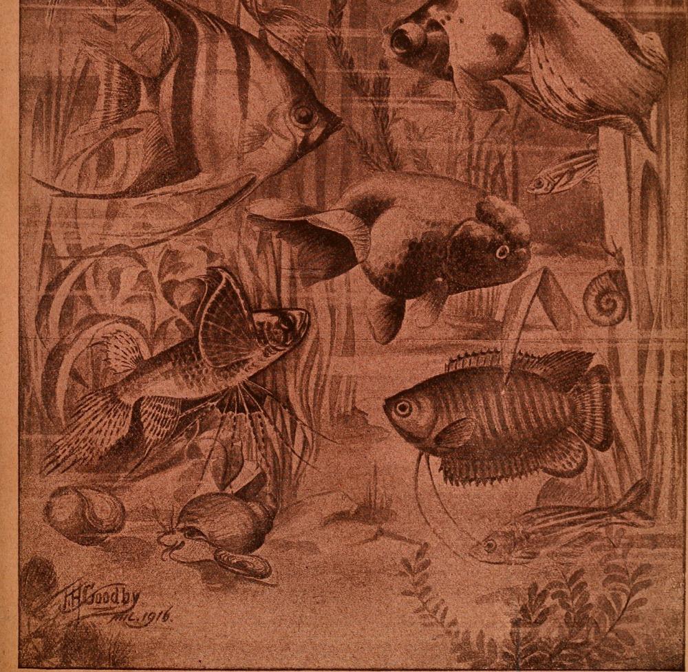 Aquatic_life_(1920)_(19125842503)